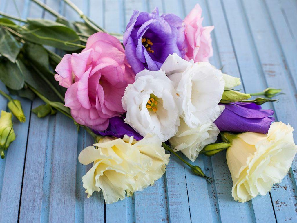 Choosing Flowers For Every Occasion